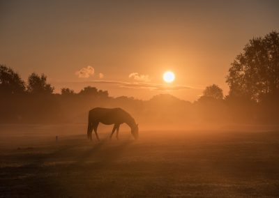 New Forest Sun Rise