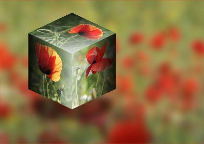 Poppy Cube