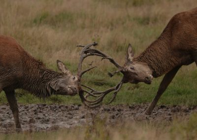 Rutting Time